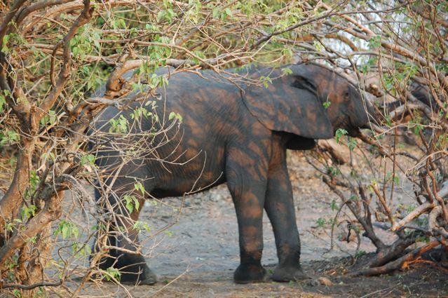Baby Elephant Lily ventures outdoors (photo essay) | OregonLive.com