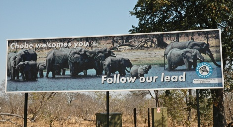 # 0 Chobe 05 Billboard by Cynthia Travis copy