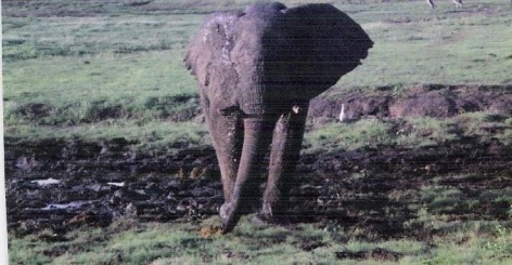 #1 Ambassador at Chobe Epiphany 1998  copy.jpg