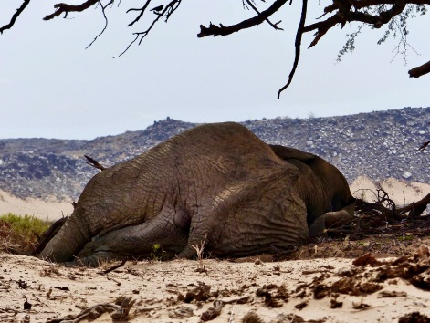 #6 Damaraland The Master Elepahnt Asleep.jpg