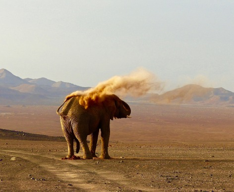 #7 Damaraland The Master Elephant Stops for the Light. jpg.jpg